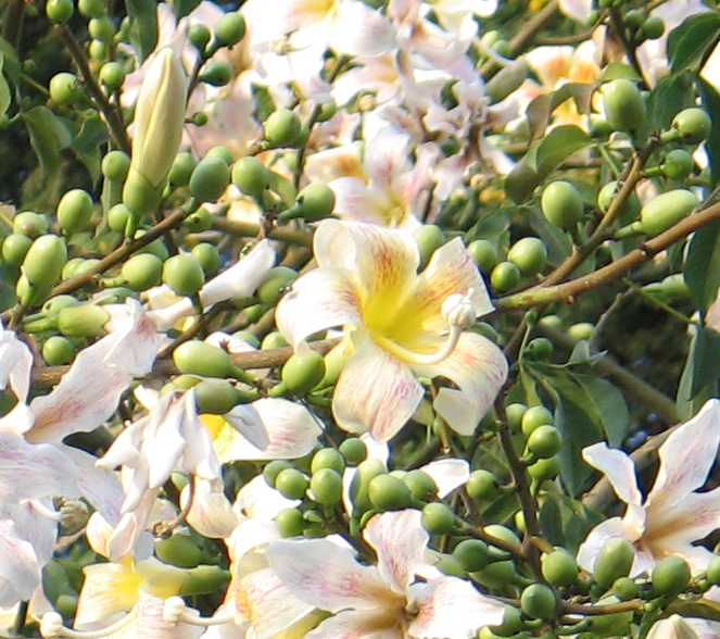 lily flower nature colors yellow white green