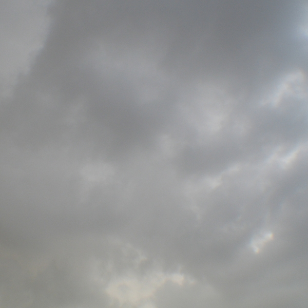 Shades of grey © makanartist