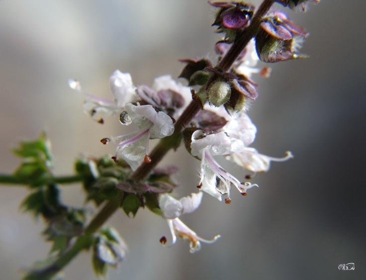 springtime_04