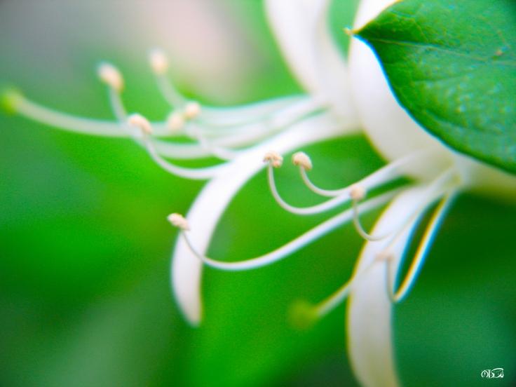 delicate_15